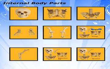 Body parts - Skeletal